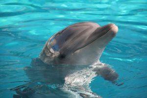 candidato delfino